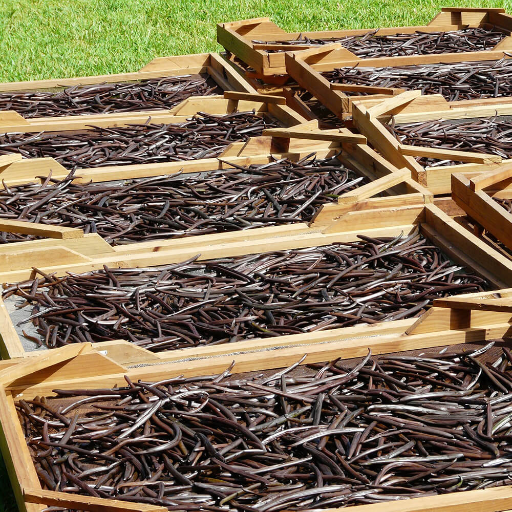 Growing Vanilla - Story of Ethical Vanilla - Love from Lila