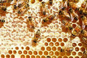 Bee Friendly Weddings - Love from lila xx - Surrey Wedding Cakes