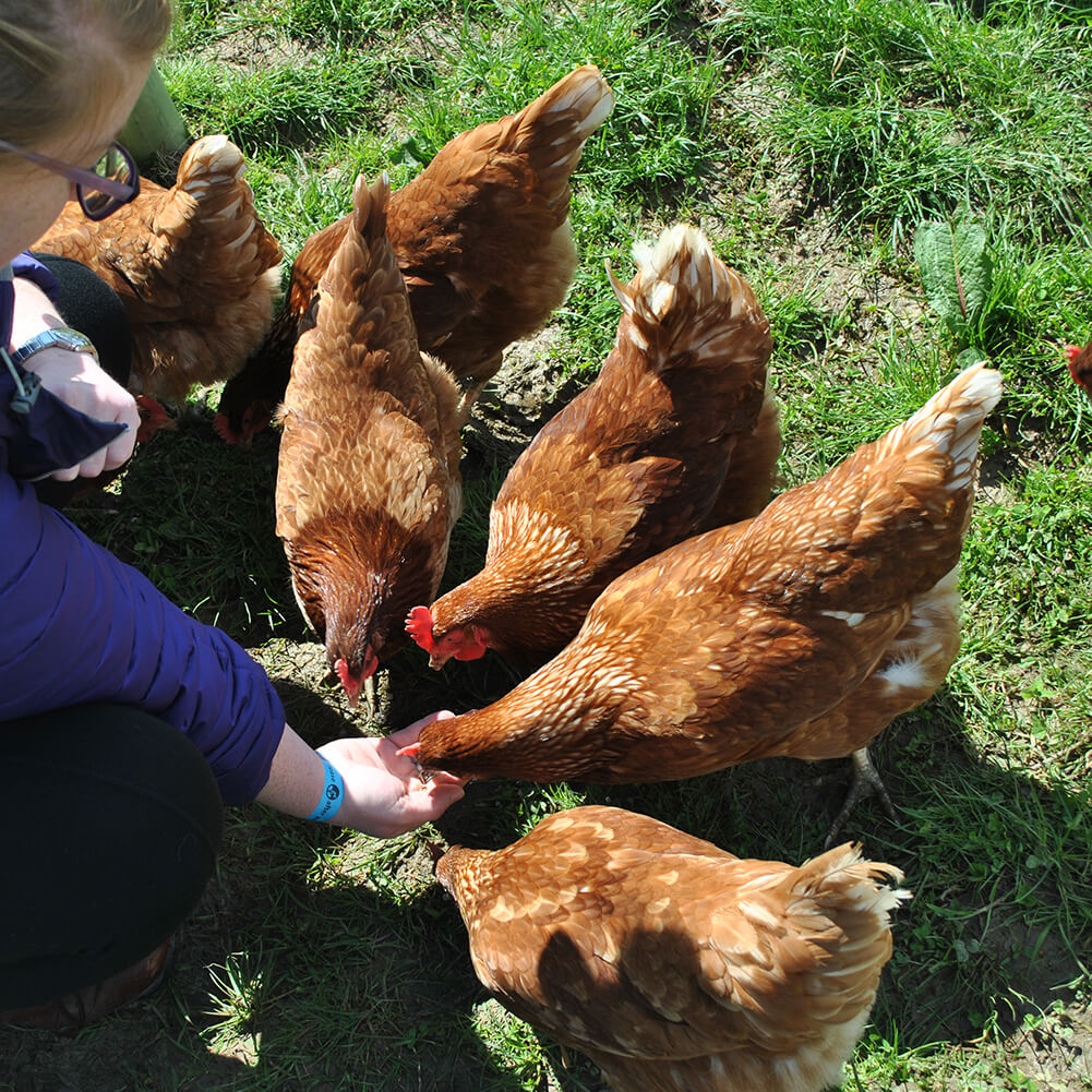 Animal Friendly Wedding Cakes - Free-Range Chickens and Eggs - Love from Lila