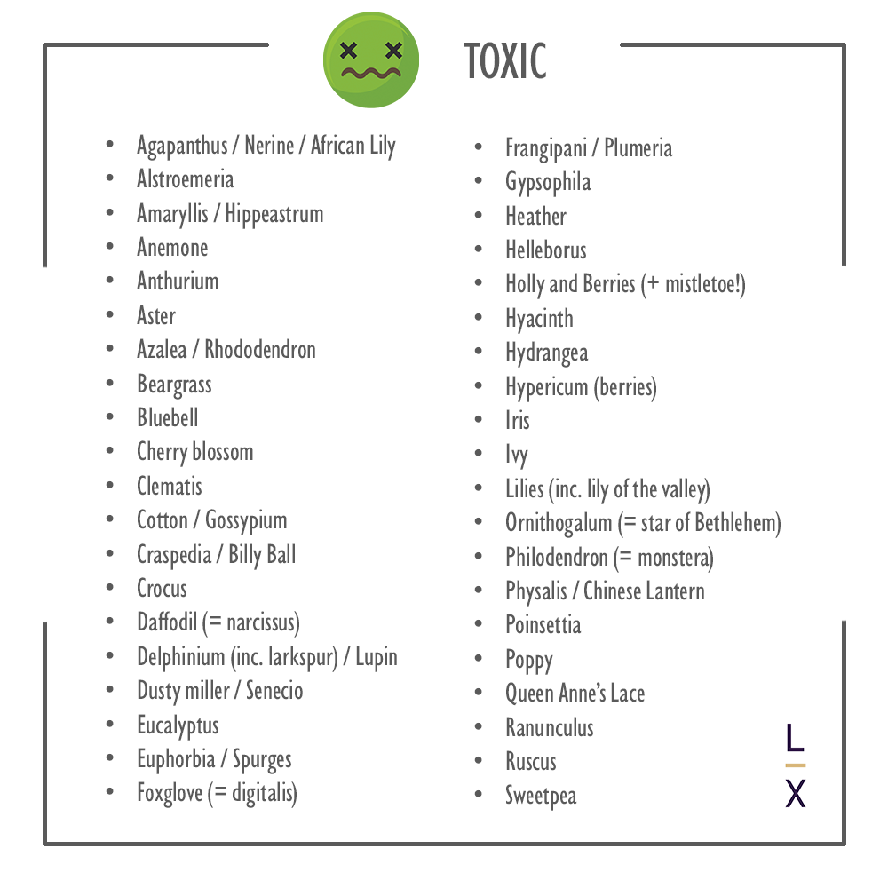 List of Toxic Flowers to Avoid Near Food